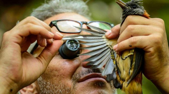 Papouasie, expédition au cœur d'un monde perdu