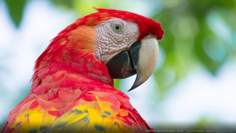 Costa Rica, une arche de nature