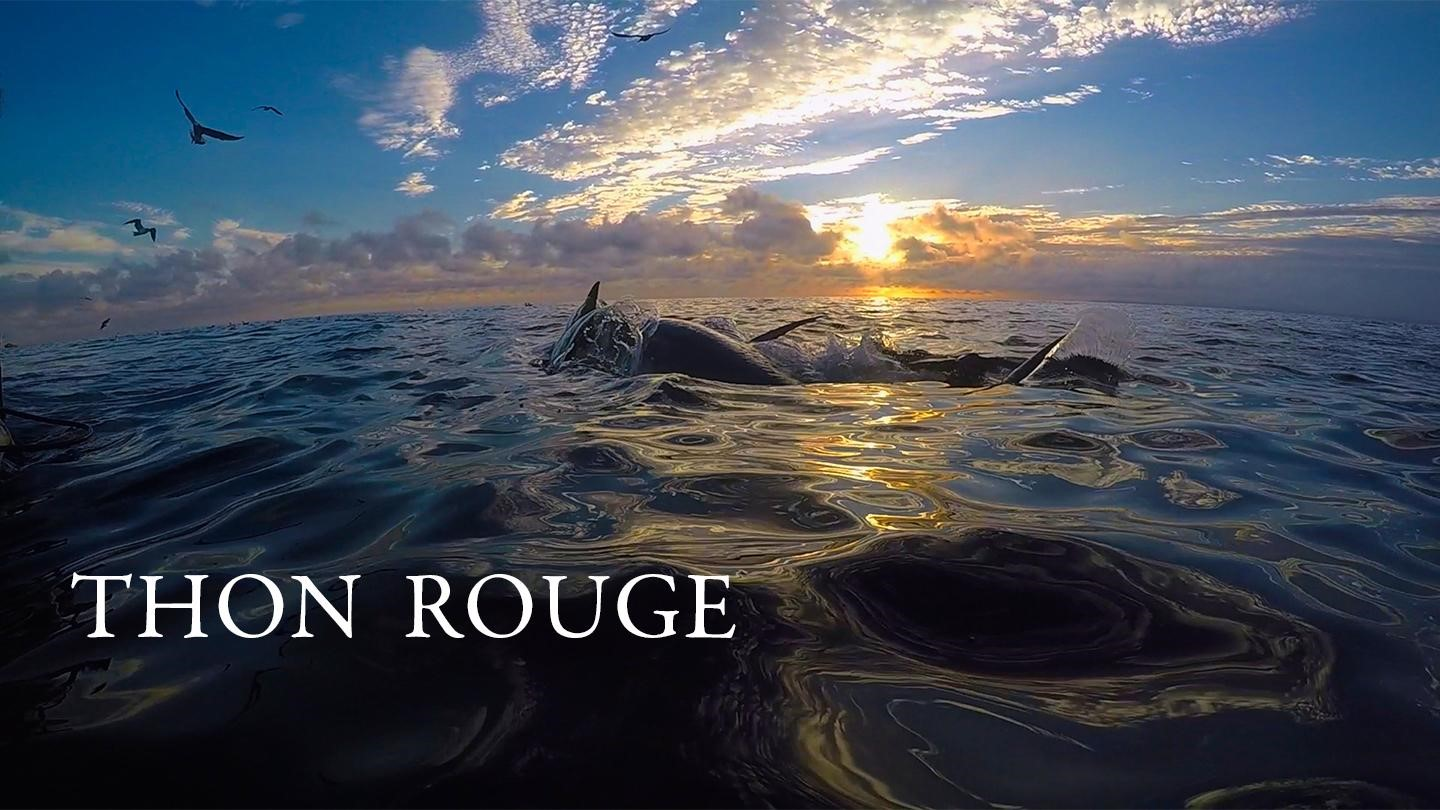 Thon Rouge